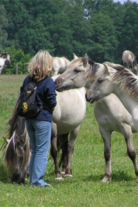 "Guided tour to ""The Liebenthaler horses"""